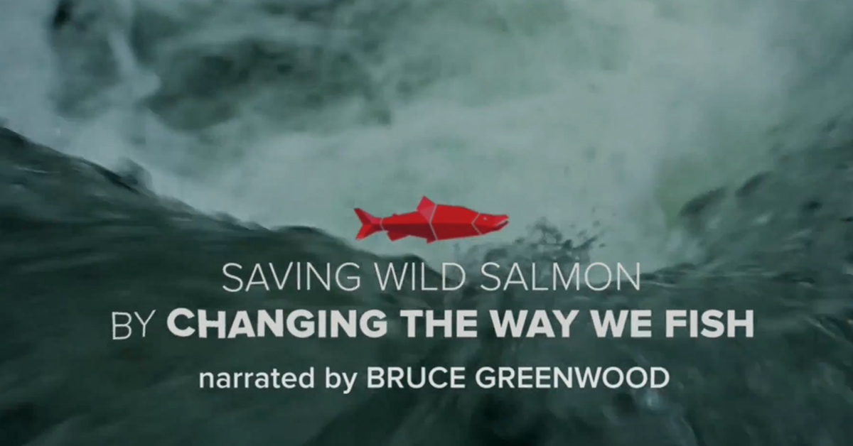 Saving Wild Salmon By Changing the Way We Fish