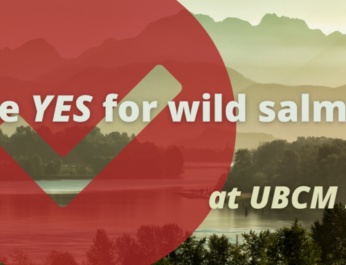 Tell your local representatives to VOTE YES for wild salmon at UBCM 2020