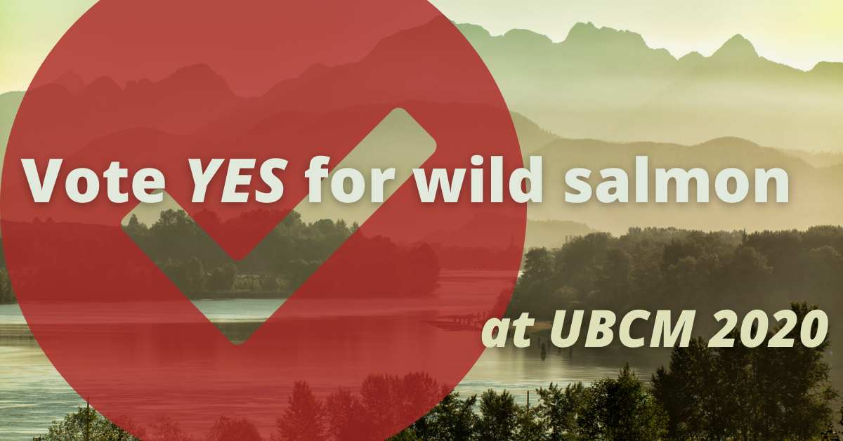 Vote yes for wild salmon at UBCM 2020