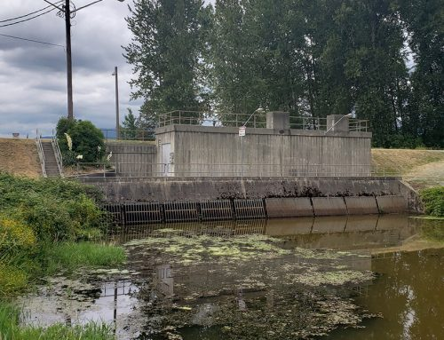 Lina Azeez: Kennedy Pump Station decision threatens struggling wild salmon
