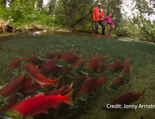 How global warming is affecting B.C. salmon