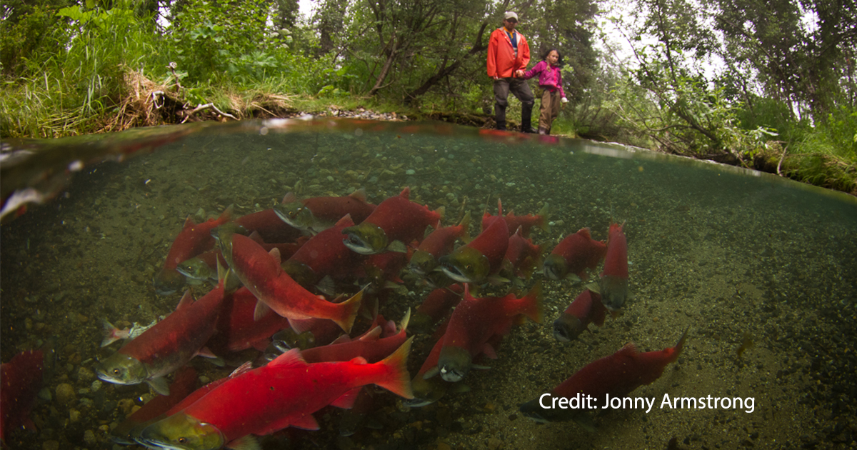Fauther and daughter observe spawning sockeye