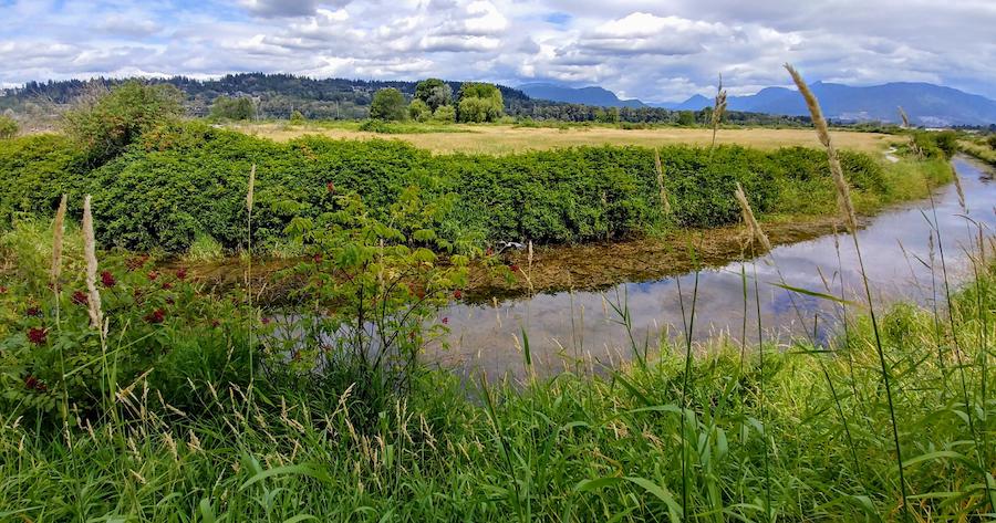 Coquitlam river