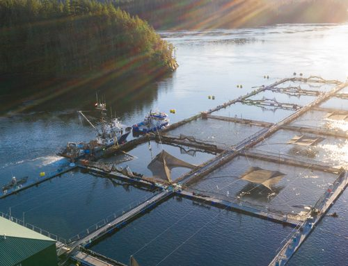 Fish farms granted an injunction. What does that really mean?