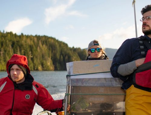 Fish farms imported foreign virus infecting BC salmon, study suggests