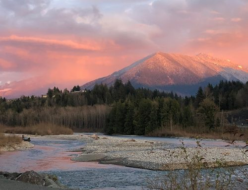 BC groups join forces to defend fish, wildlife & habitats