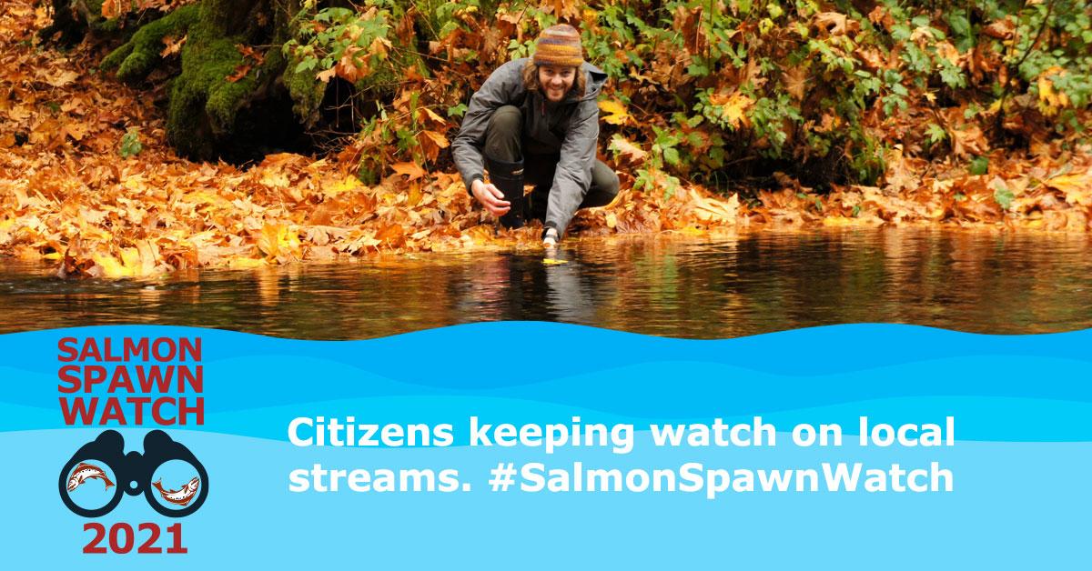 salmon spawn watch