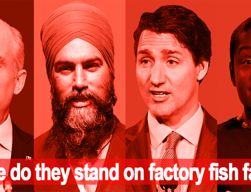 Where do the federal parties stand on B.C. salmon farms?