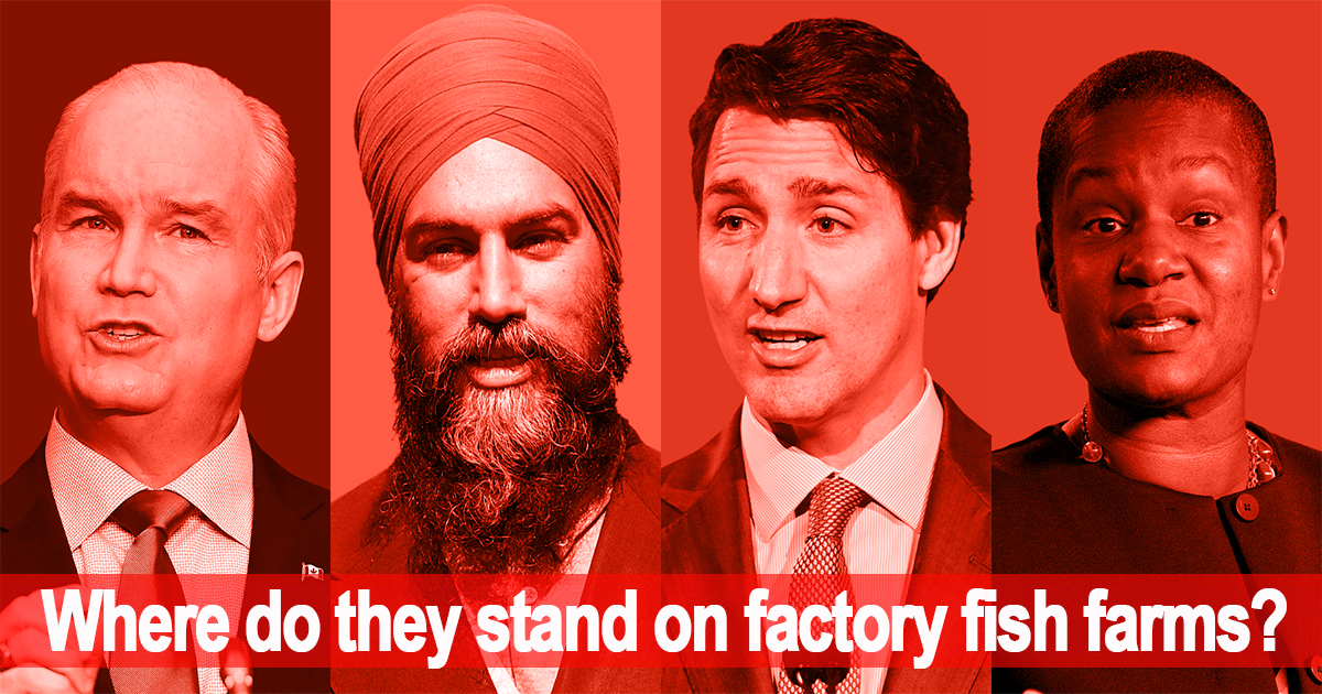 4 leaders, where do they stand on factory fish farms?