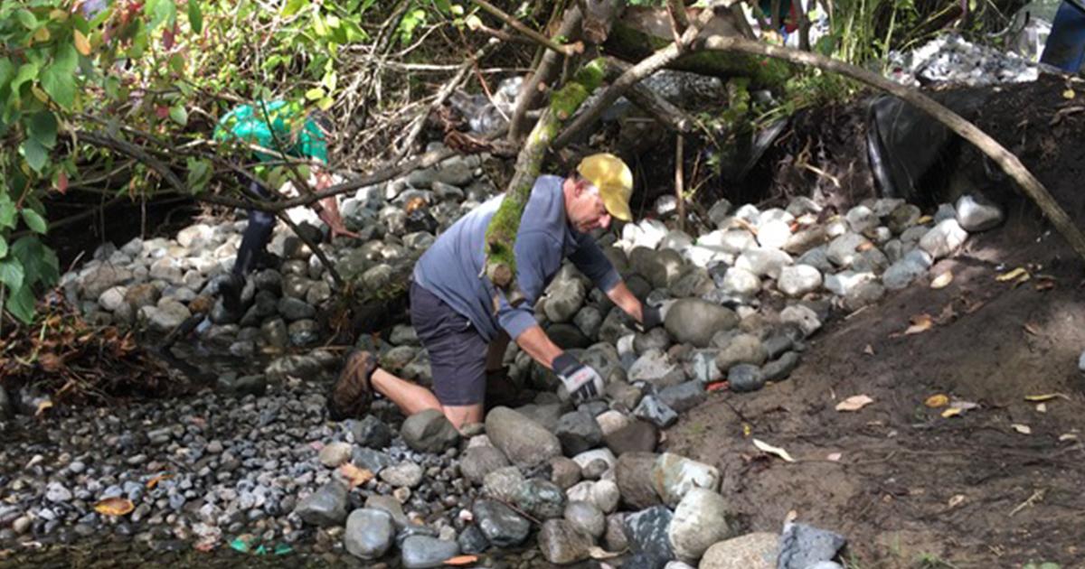 Man streamkeeping in Bowker Creek